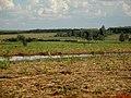 Bando de paturi ou irerê (Dendrocygna viduata) voando ao lado da rodovia vicinal Motuca a Matão, próximo a região dos assentamentos. - panoramio.jpg