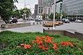 Beautiful flowers against a dreary backdrop (20130243244).jpg