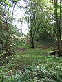 Bed of dismantled railway, Brownhills Wood - geograph.org.uk - 257646.jpg