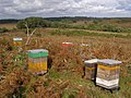 Bee hives on the heath, Duck Hole, New Forest - geograph.org.uk - 563523.jpg