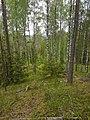 Belaja Rus' landscape reserve.jpg