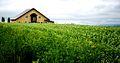 Biei landscape (7662410004).jpg