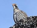 Bird 3559 (24528060487).jpg