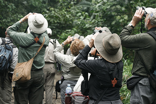 Birdwatching in Panama, Author Alex Poimos (CC BY-2.0)
