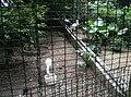 Birds in Zoo Negara Malaysia (11).jpg