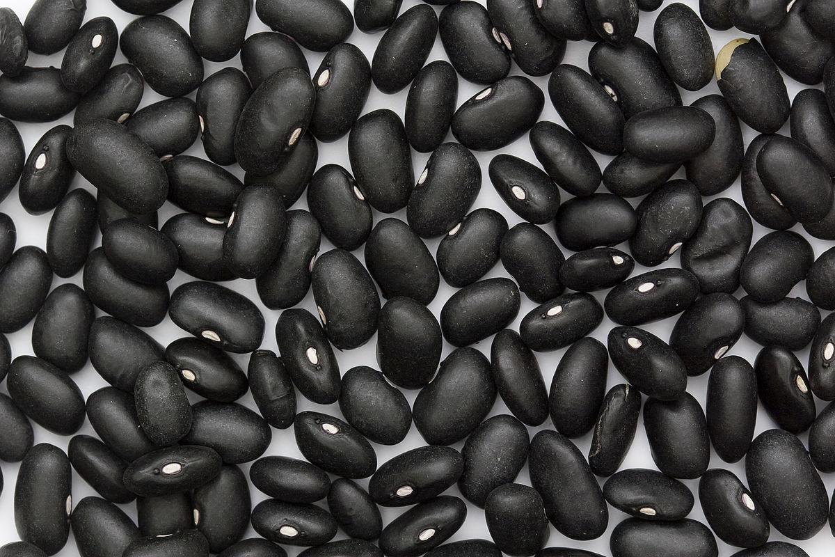 Black turtle bean - Wikipedia