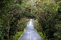 Blick auf die Straße GM-1 im Nationalpark Garajonay auf La Gomera, Spanien (48293712406).jpg