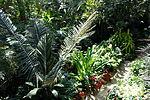 Bloedel Floral Conservatory, Queen Elizabeth Park - Vancouver, Canada - DSC07476.JPG
