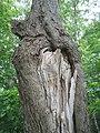 Bloomfield Provincial Park IMG 8278 (1848236133).jpg