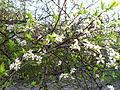 Blossoms 9.JPG