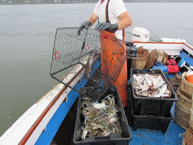File Blue Crab Pot Trap Jpg Wikimedia Commons