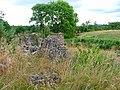 Bogingore in Summer - geograph.org.uk - 38638.jpg