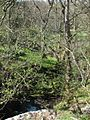 Boquhan tributary - geograph.org.uk - 164892.jpg