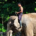 Borobudur-Temple-Park Mahouts-of-the-elephant-cage-02.jpg