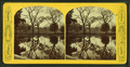 Boston Common, from Robert N. Dennis collection of stereoscopic views 5.png