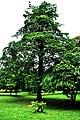 Botanic garden limbe32.jpg