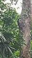 Botanical Garden Singapore (39153422821).jpg