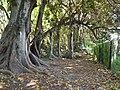 Botanical garden El'Hamma 6.jpg