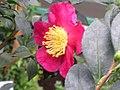 Botanická zahrada Liberec (05).jpg
