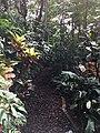 Botanische tuinen Utrecht 40.jpg