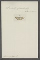 Botys - Print - Iconographia Zoologica - Special Collections University of Amsterdam - UBAINV0274 061 09 0002.tif