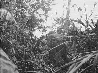 Battle of Koromokina Lagoon - Image: Boug Koromokina Marines