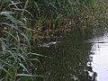 Branitzer Park, Kastanienallee, 03042 Cottbus, Germany - panoramio.jpg