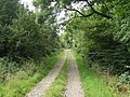 Bridleway in Craignant Wood - geograph.org.uk - 538667.jpg