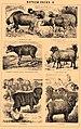 Brockhaus and Efron Encyclopedic Dictionary b42 684-6.jpg