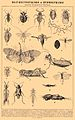 Brockhaus and Efron Encyclopedic Dictionary b47 384-0.jpg
