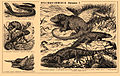 Brockhaus and Efron Encyclopedic Dictionary b49 082-3.jpg