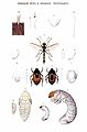 Brockhaus and Efron Encyclopedic Dictionary b73 430-0.jpg