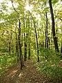 Bubovice, slunce v podzimním lese.JPG