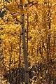 Buckhorn Rd-Little Beaver Creek Tr 9-26 (21177635064).jpg