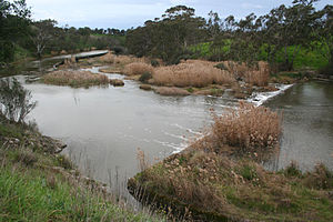 Barwon River (Victoria) - The weir above Buckley Falls, looking downstream