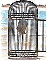 Buddah in Cage.jpg