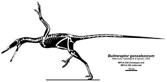Buitreraptor - Skeletal restoration showing some known remains of B. gonzalezorum