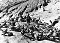 Bundesarchiv Bild 135-S-15-08-08, Tibetexpedition, Himmelsbestattung, Geier.jpg