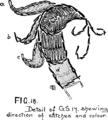 Burmese Textiles Fig18.png