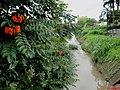 Córrego dos Palmitos em Orlândia - panoramio.jpg