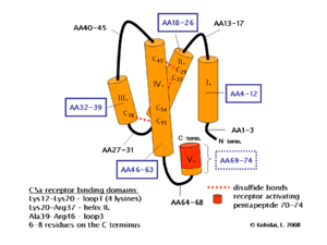 Complement component 5a - Image: C5a 3D
