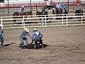 CFD Tie-down roping Cowboy No. 577 -3.jpg