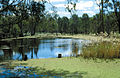 CSIRO ScienceImage 4470 Barmah forest wetland VIC.jpg