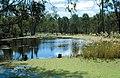 CSIRO ScienceImage 4470 Barmah forest wetland VIC.jpg