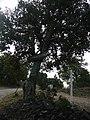 Cabana del Moro (Llauro) - Panneau chemin.jpg
