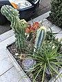 Cactus Box 1 2017-10-22.jpg