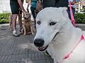 Caminata por los perros y animales Maracaibo 2012 (21).jpg