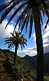 Canary Islands 2018-02-11 (39595237715).jpg