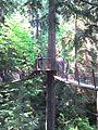 Capilano Treetops Adventure.jpg