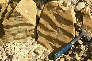 Carmel Formation - Ripplemarks in a biosparite/grainstone from the Middle Jurassic Carmel Formation, southwestern Utah.